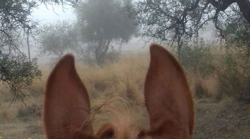 Cazadores en la Niebla.