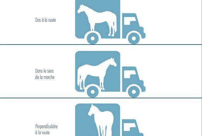 ¿Cual es la Orientación mas Cómoda para el Caballo Durante el Transporte?.