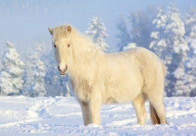 Por qué los Caballos no Deben ser Abrigados en Invierno.